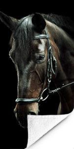 Fotohanddoek Paard-3